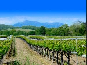 California Vineyard