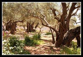 Garden of Gethesemane