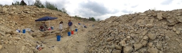 Fossil Dig 3