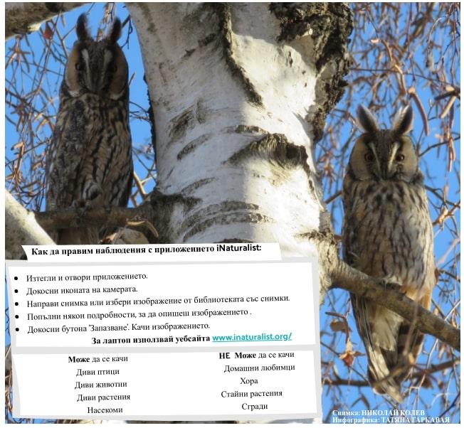 да правим наблюдения с приложението iNaturalist