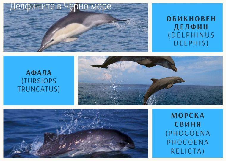 в Черно море