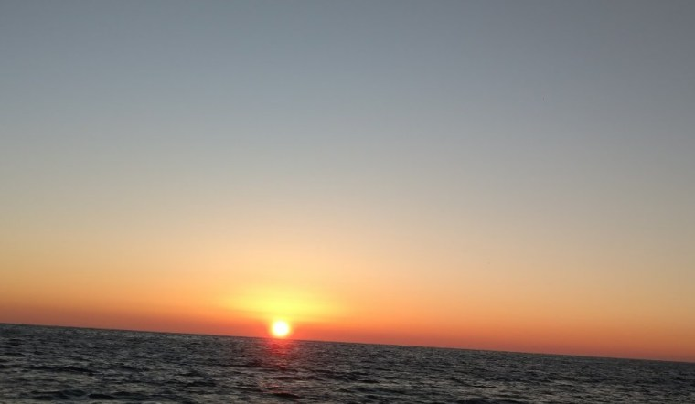 counting dolphins in the black sea 7 1