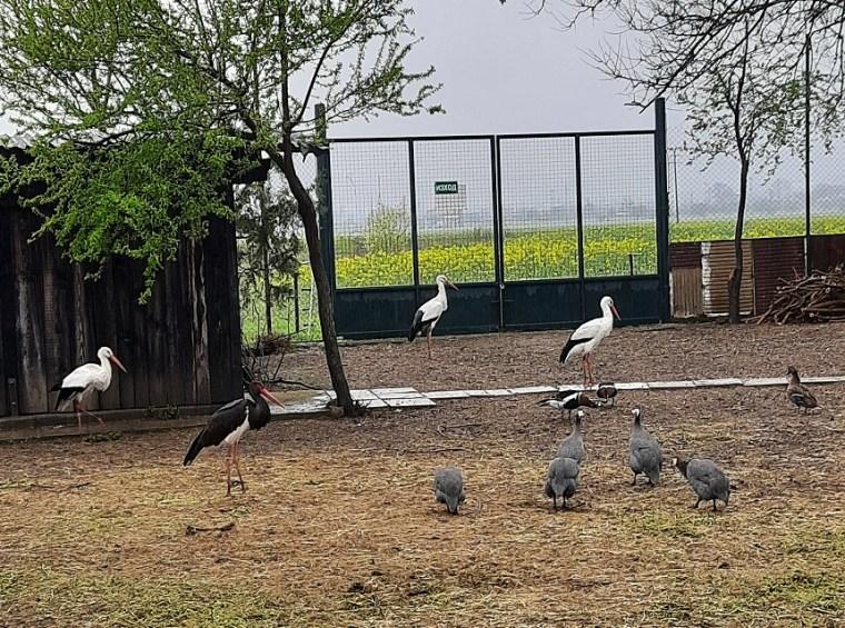 how I adopted 4 wild birds stara zagora1 1