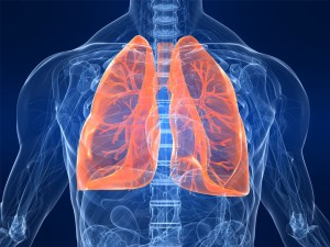 Transparent Illustration - Torso and Lungs