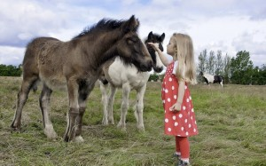 Horses reduce stress