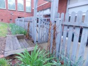 Wooden steps lead children up into the garden space while vines of morning glory wait for warmer weather.