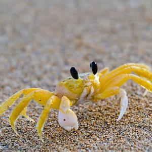 D\'un Crabe