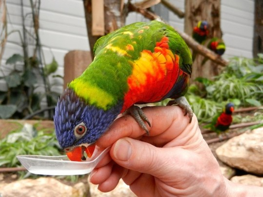 Zoo Biotropica - www.biotropica.fr