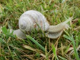 Le Clos de la Risle : Molo l'escargot
