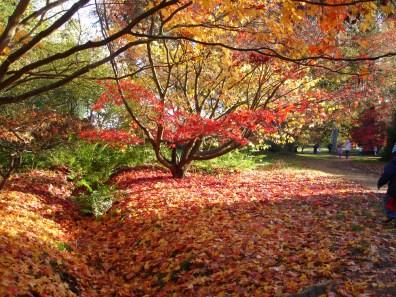 Le Clos de la Risle : Arboretum d'Harcourt