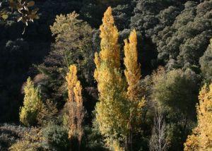 autumn in Andalucia