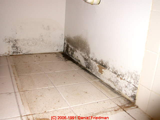 bathroom mold mold in bathrooms on