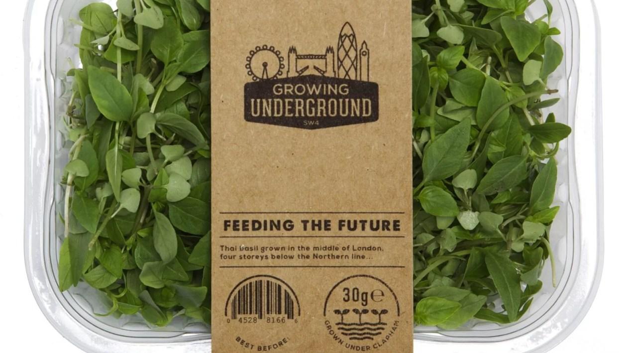 Miejska farma pod ulicami Londynu