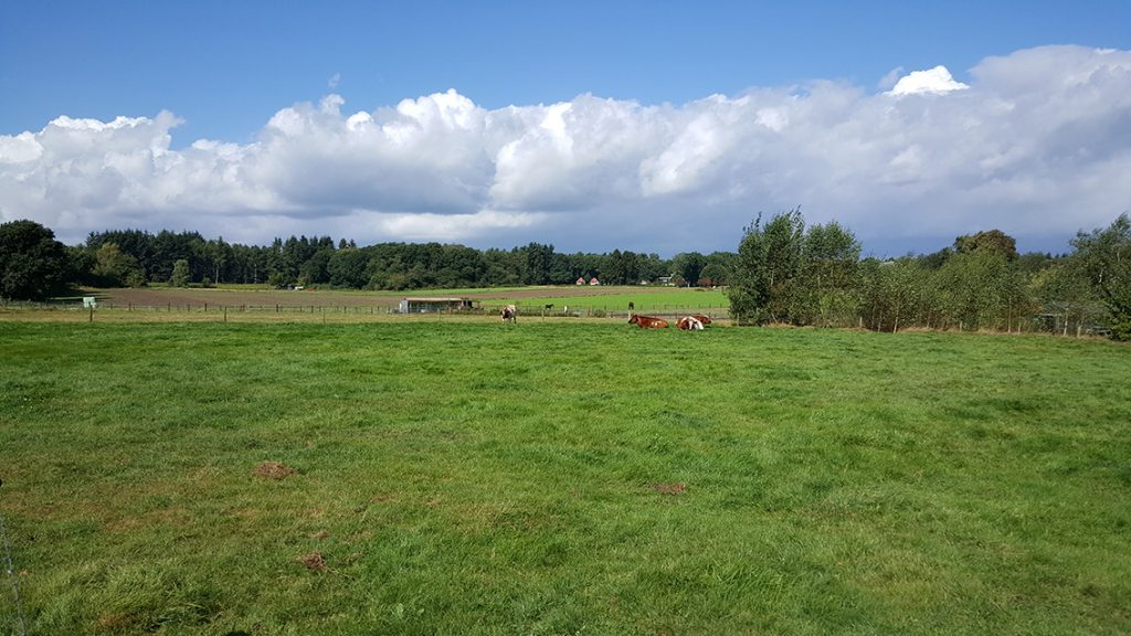 Landschap in Loenen