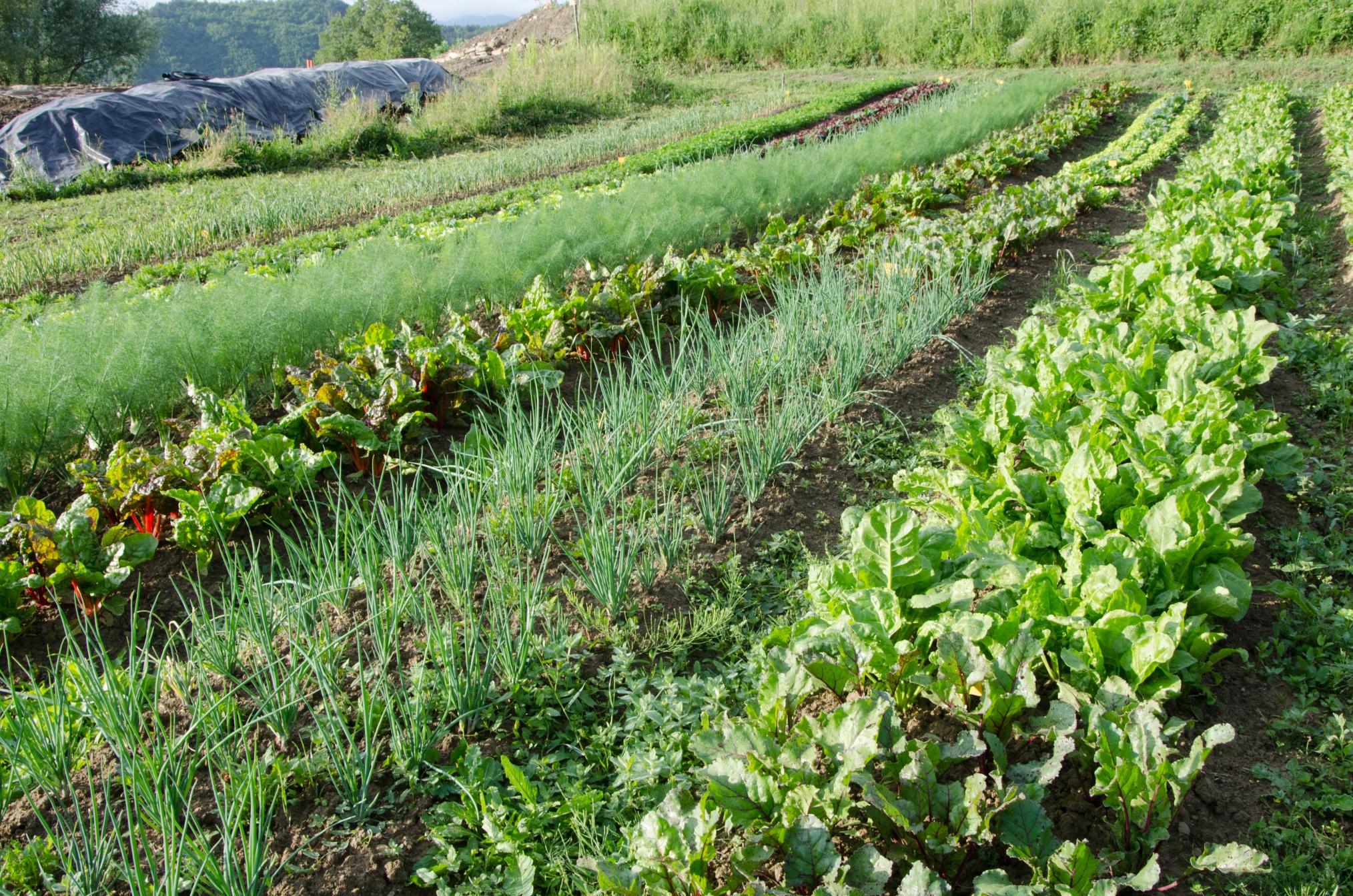 Home Garden Herbs