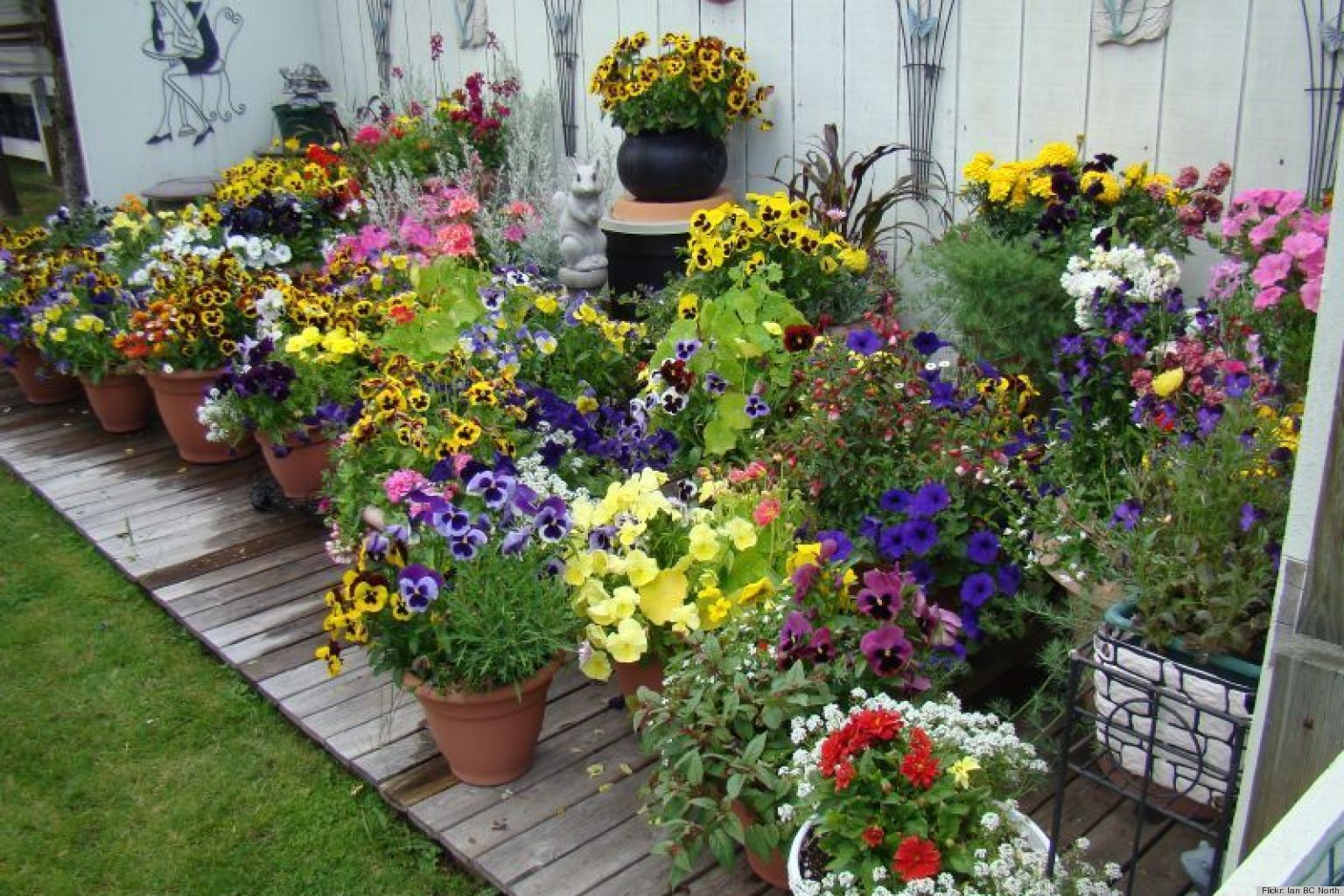 Pot Plant Flowers