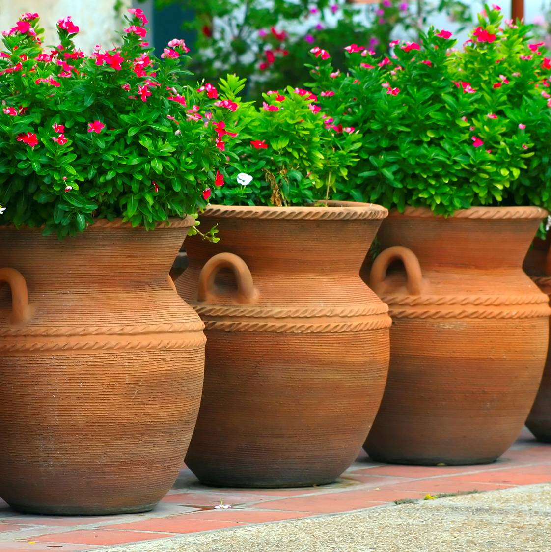 Large Planter Garden and Terrace Pots Ideas