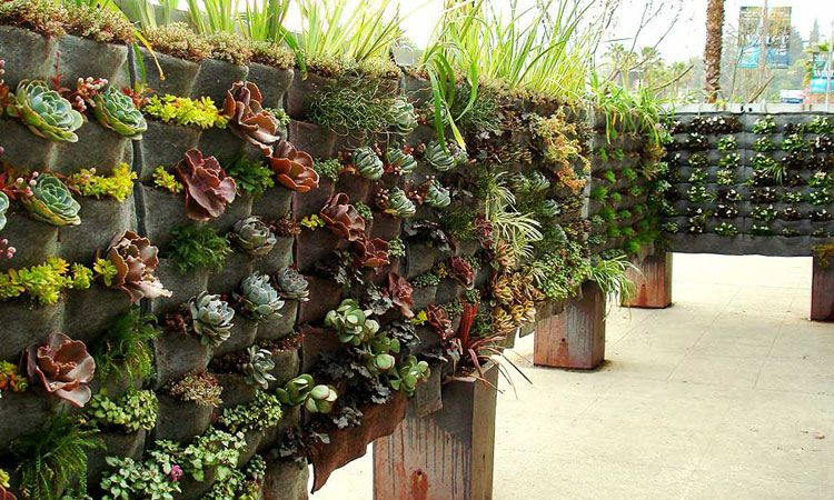 vertical garden front house ideas