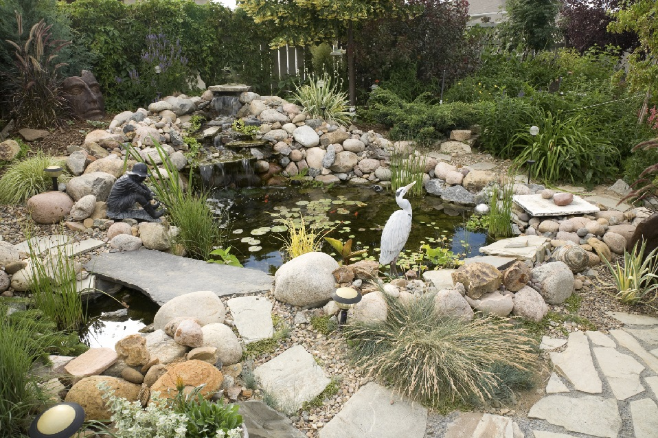 Beautiful fish pond Design