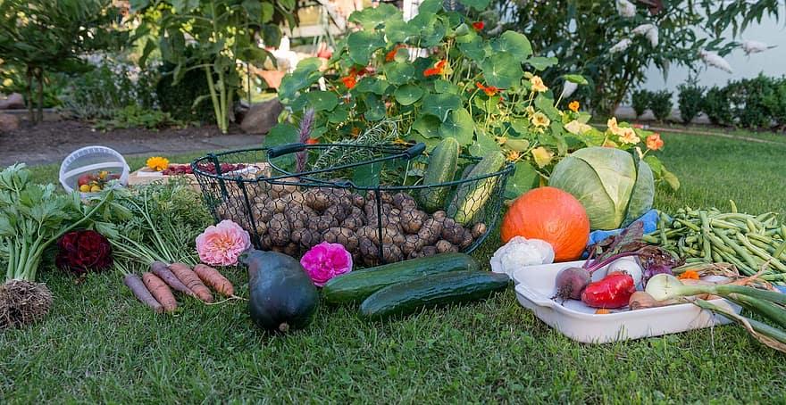 autumn harvest garden vegetables vegetable garden fruit potatoes carrots pumpkin 1