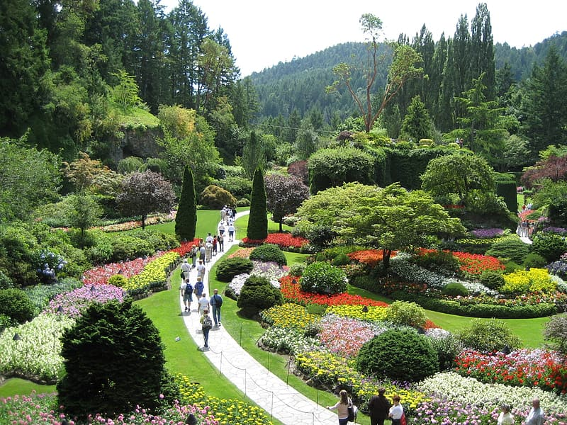 green and red flower garden during daytime