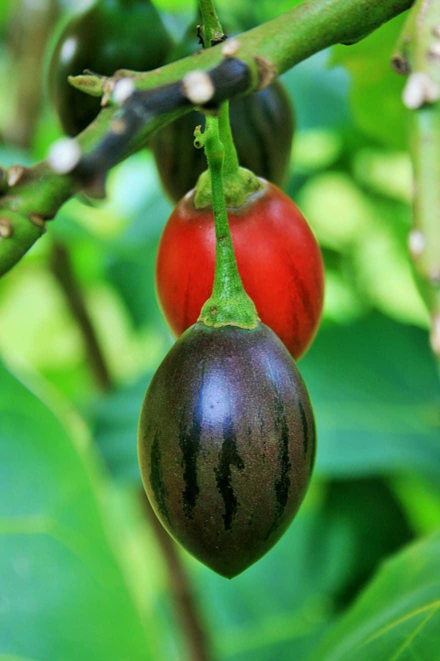tree tomato green fruit juicy food ripe healthy fresh diet