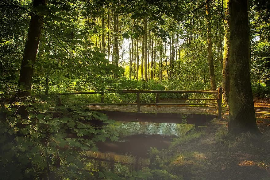 bridge forest fog nature bach water watercourse mirroring forest path