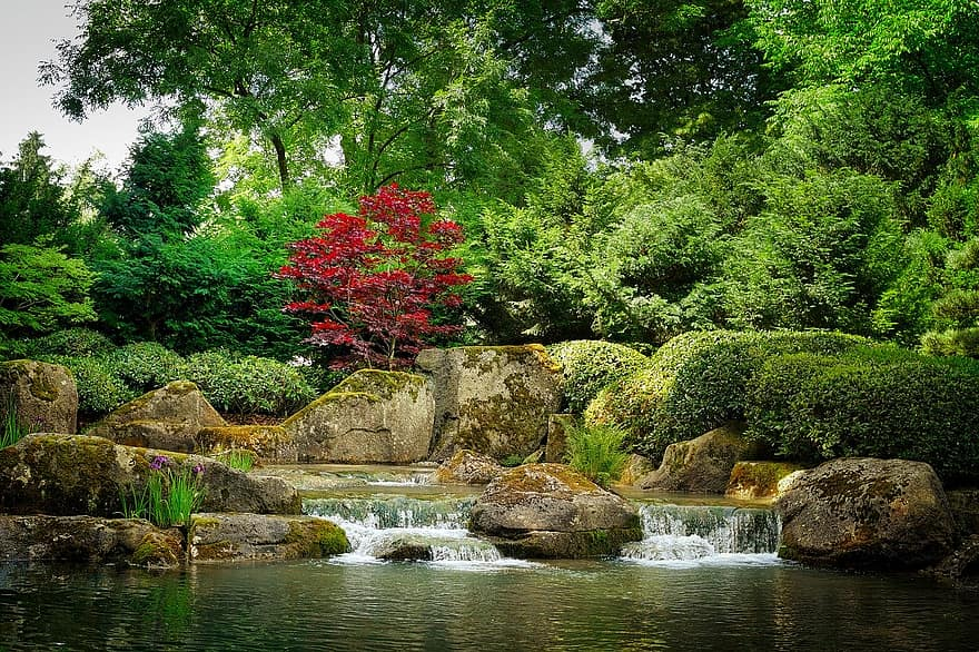 nature waters tree leaf river bach garden japanese forest