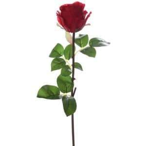 Rose bouton - rouge