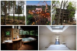 Cool Tree House Designs