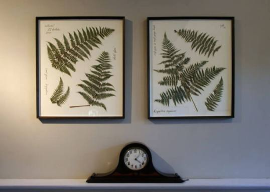 Pressed Ferns from ECAB
