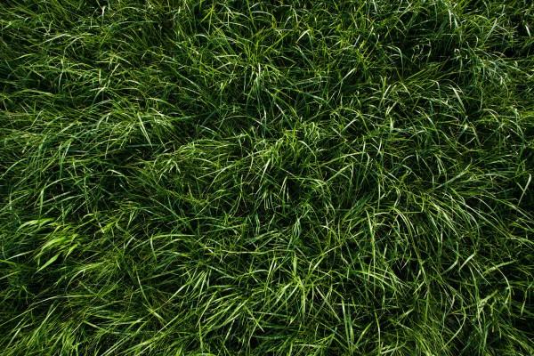 Deep-Green-Grass-Texture