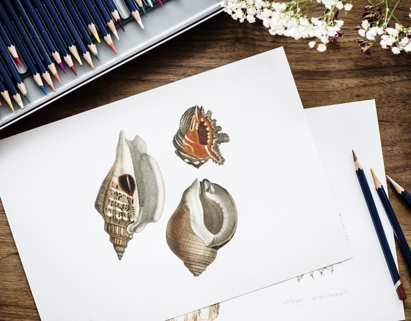 beautiful shell drawings on a white piece of paper