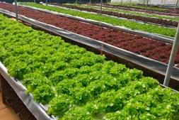 Understanding the Importance of pH in Hydroponics