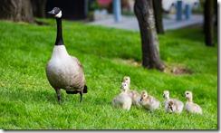 10 pistes pour apaiser la relation parents-enfants2