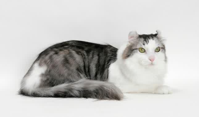 Black And White Kitten Yellow Eyes