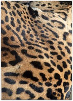 d766fba502e910000efaa5fb35dd46e0--jaguar-animal-prints