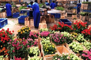 THE GROWING FLOWER INDUSTRY IN KENYA