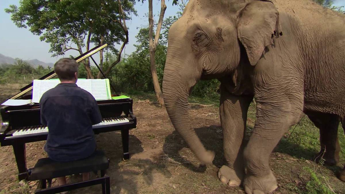 Pianist Finds Fulfillment Playing Music for Blind Elephants
