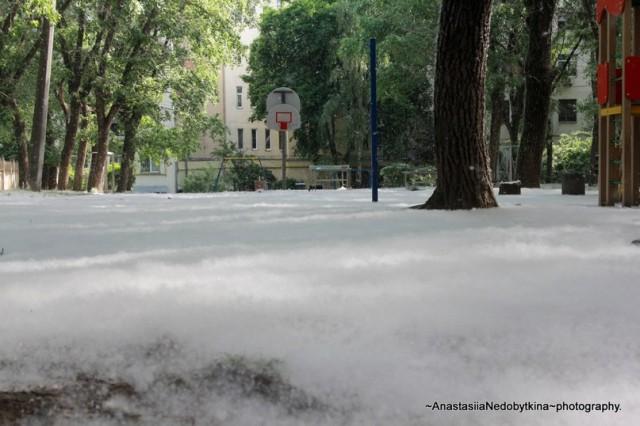 Тополиний пух у Києві