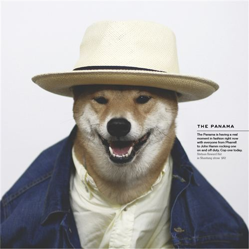 Menswear Dog_01