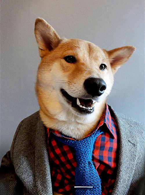 Menswear Dog_14