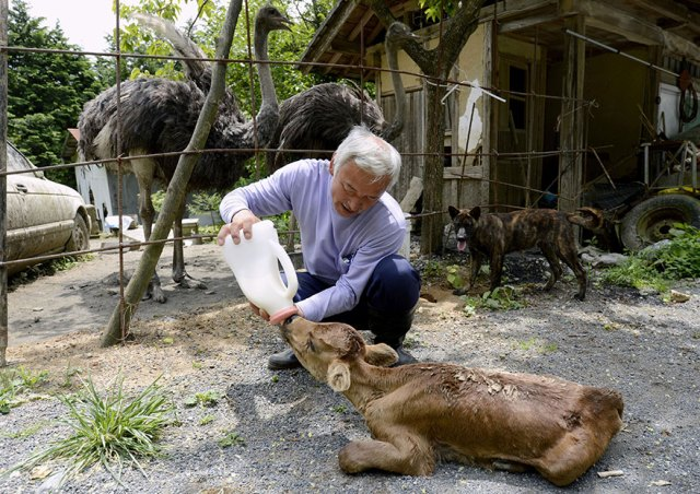 fukushima-radioactive-disaster-abandoned-animal-guardian-naoto-matsumura-13