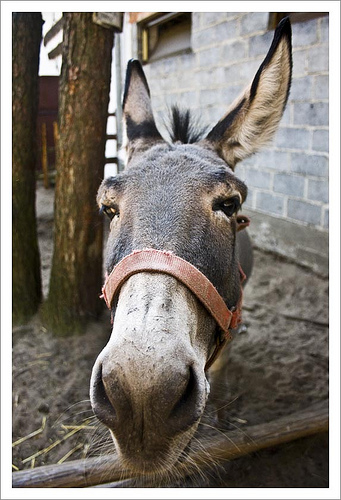 Yep, I Said the Donkey Is Talking