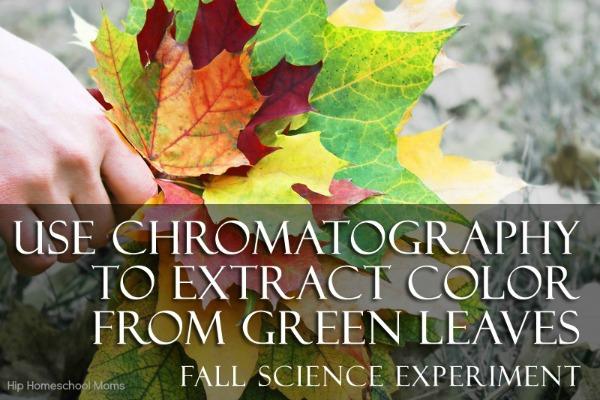 fall leaf experiment