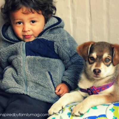8 Best Reasons Why Your Kid Needs a Dog