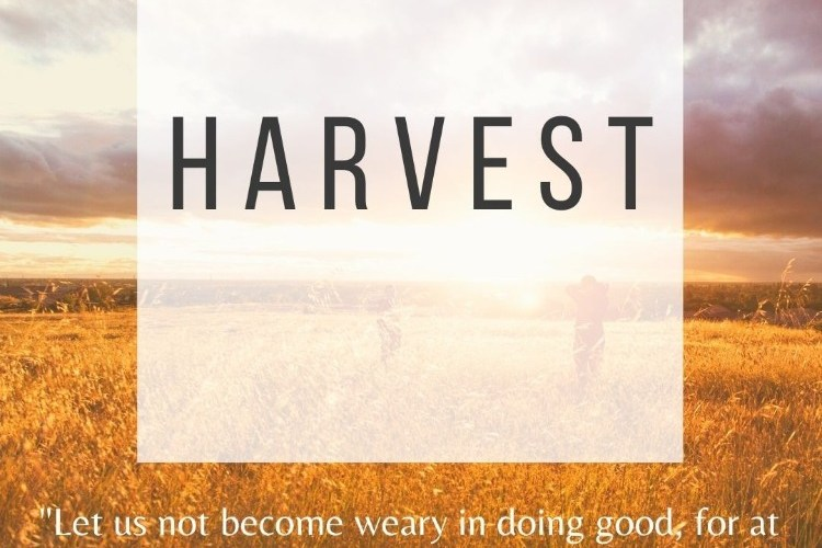 Motherhood: When We Don't See the Harvest