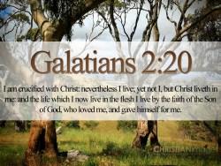 galatians-220_5618_1024x768