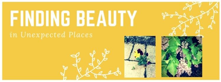 Finding Beauty In Unexpected Places