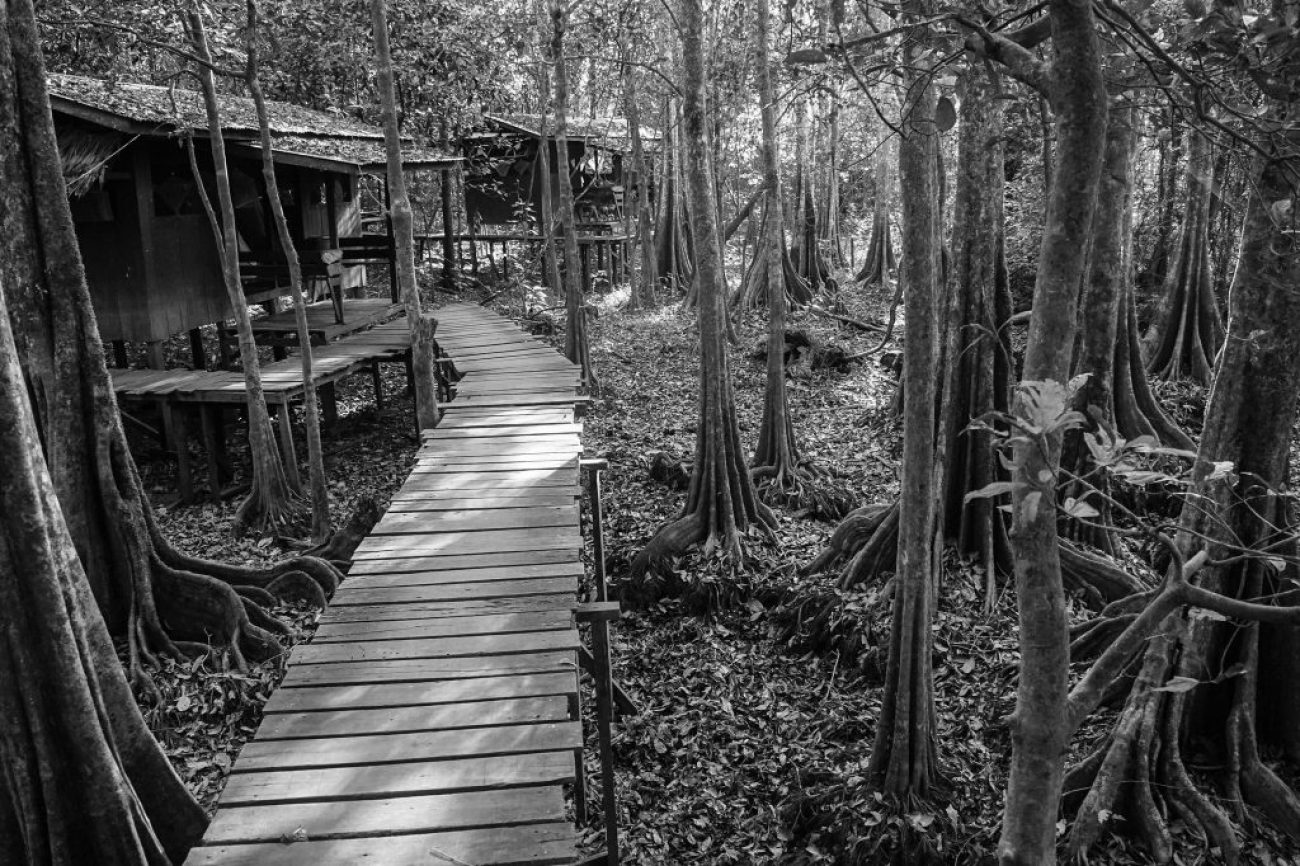uncle tan's jungle camp - The best borneo wildlife tour offering borneo on a budget